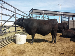 2016 Great Bend Farm & Ranch Show 2