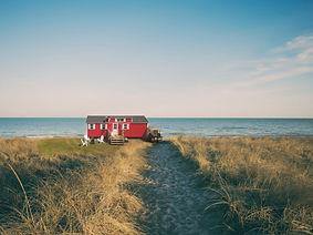 red oak on grassy beach.jpg