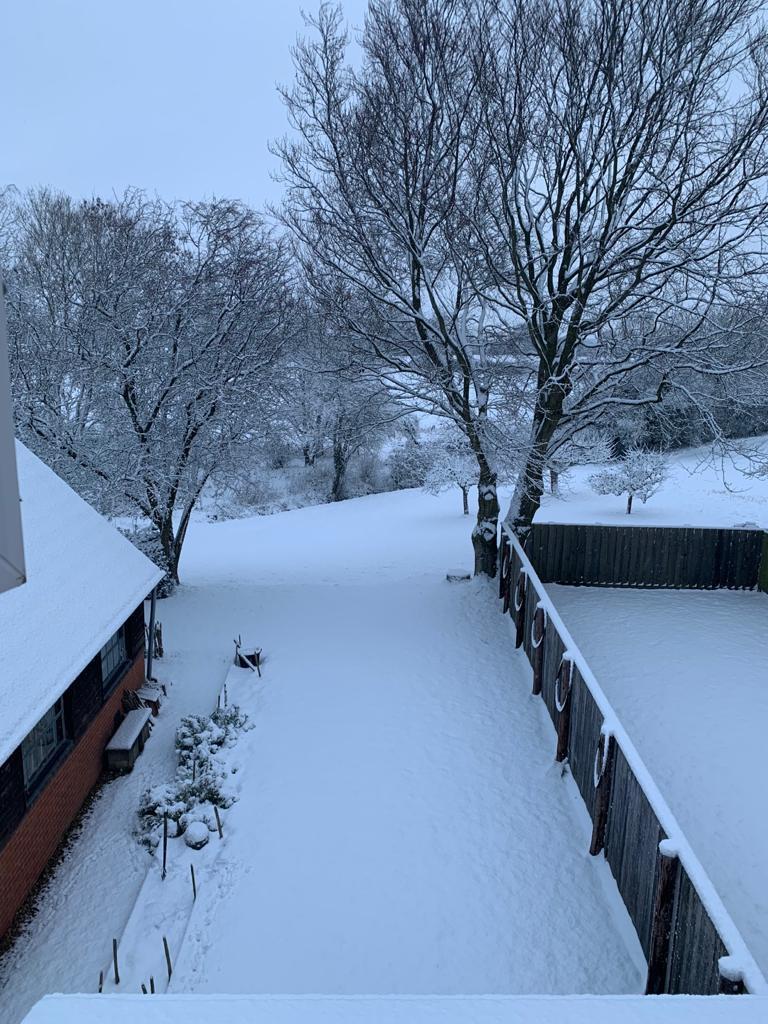 snow covering the garden
