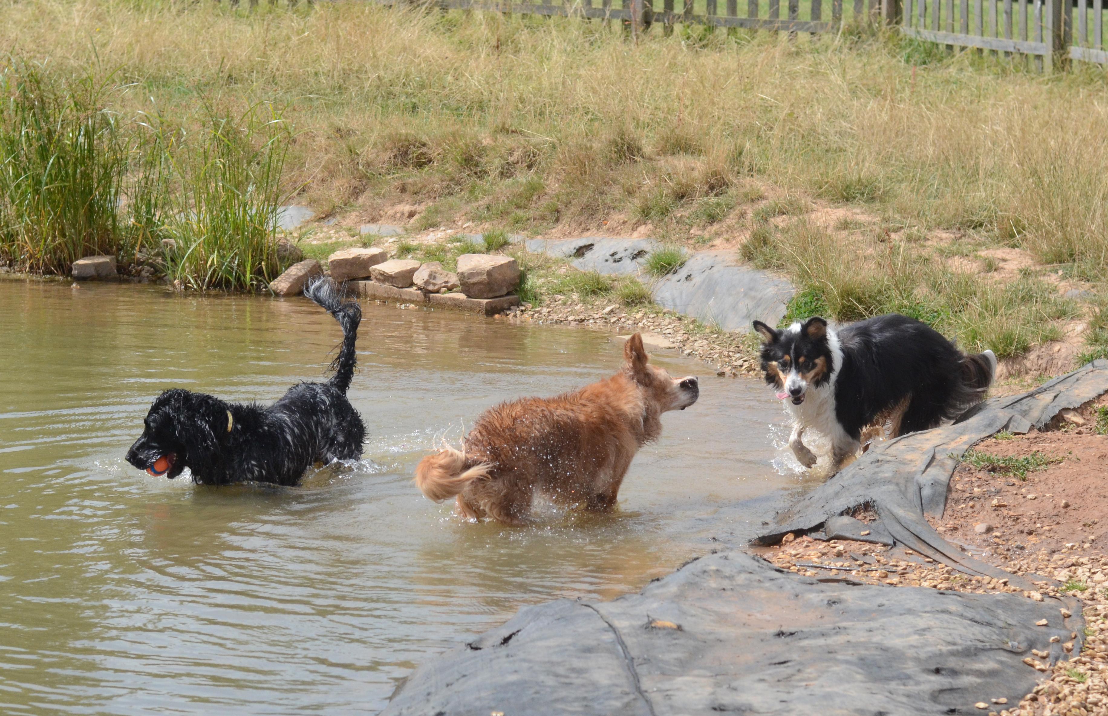 A family dip
