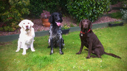 Rookie, Henry and Alfie