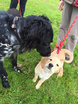 Rookie meets another Poppy!
