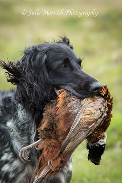 Rookie with Pheasant