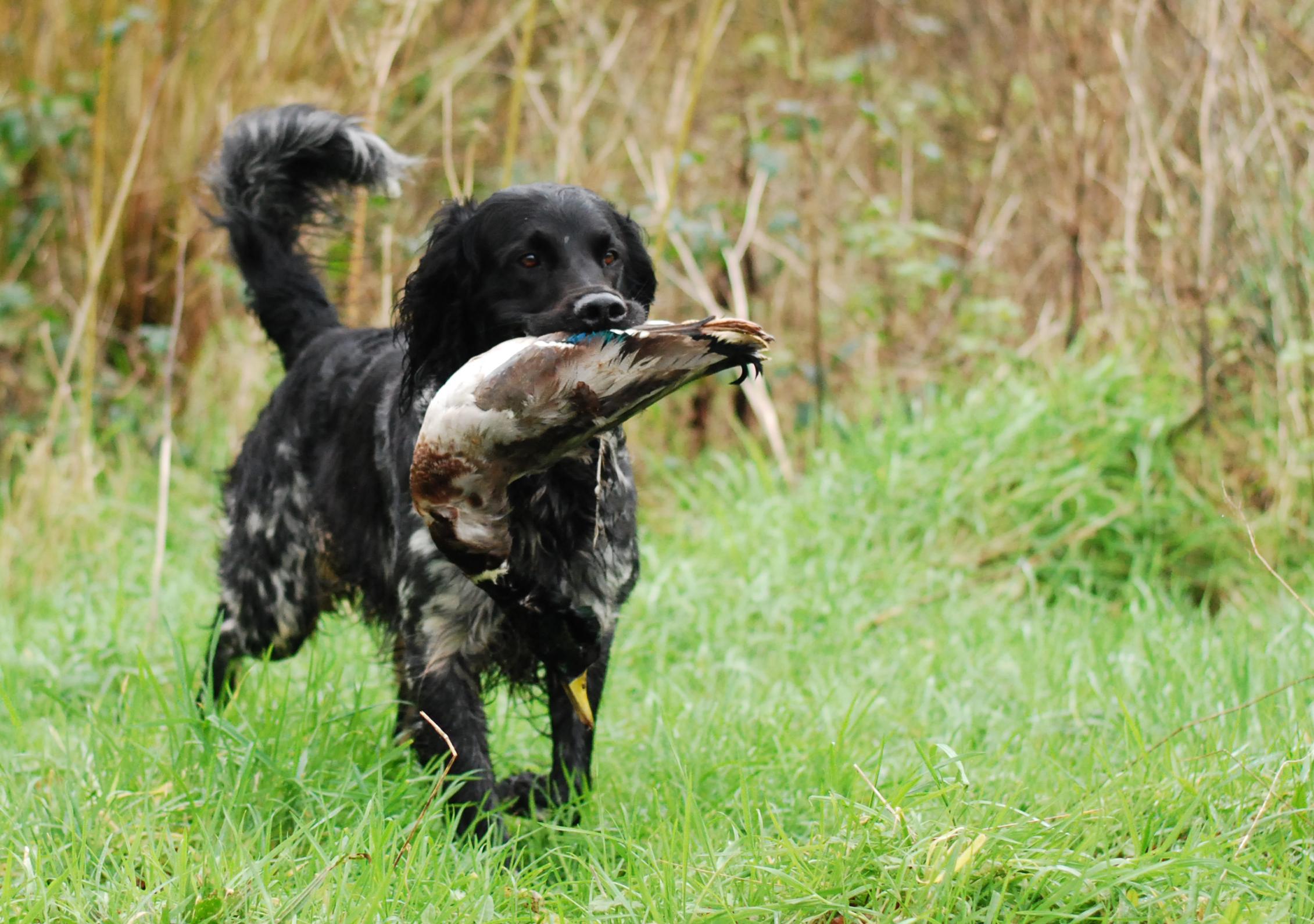 Duck retrieve
