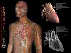 VR Medical Simulation
