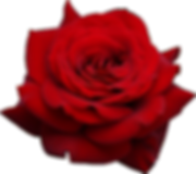 rose-hd-png-red-rose-png-image-free-pict