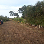 Tree guards removed at Westhorpe.jpg