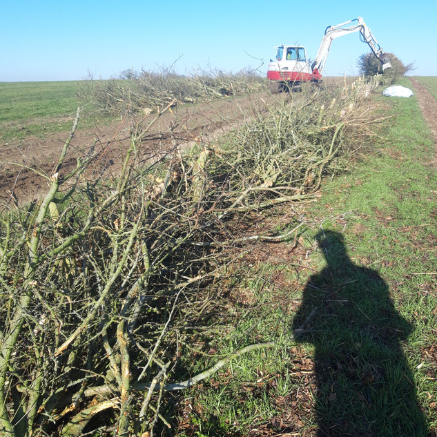 Coppicing and dead hedging .jpg