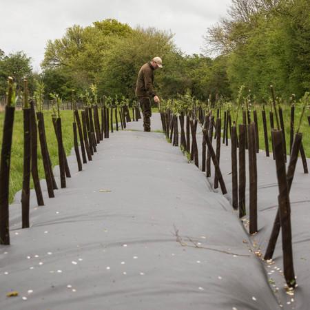 Hedge & Tree Planting