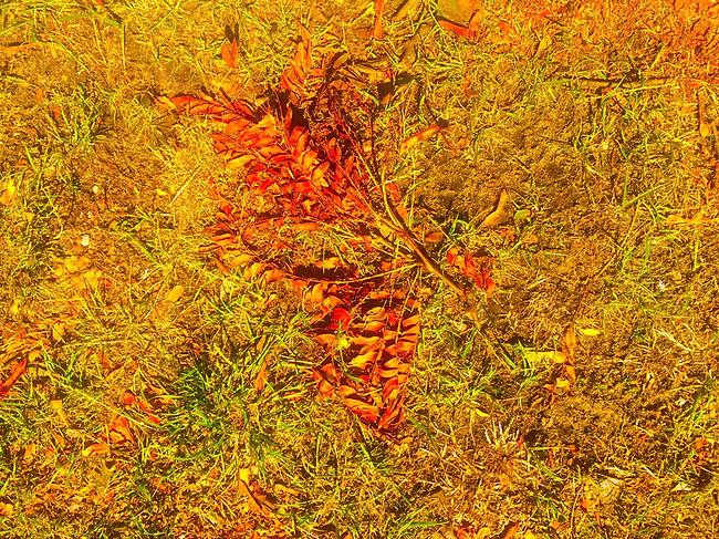 closer Lasered artwork_lr_144dpi.jpg
