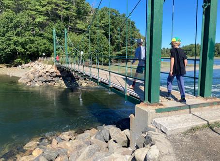 The Wiggly Bridge & Steedman Woods