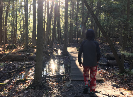 Forest Bathing and Video Gaming
