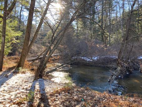 Mill Brook Preserve, Westbrook