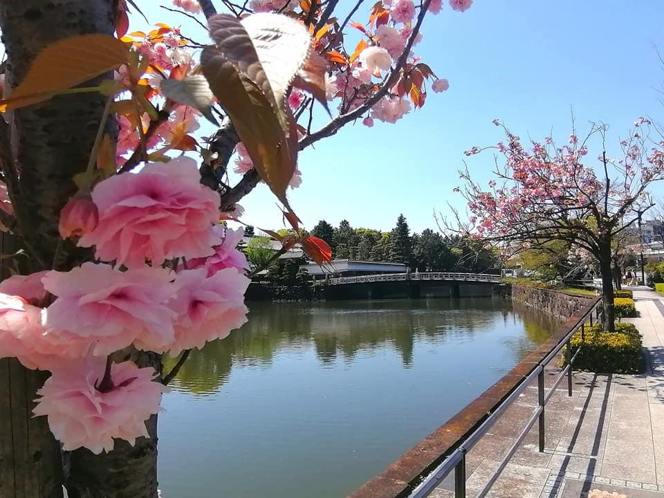 平川門を望む