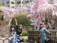 桜の下で気分が上がる!