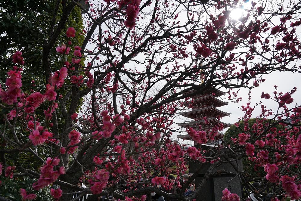 Take by Awashimadou in Sensouji temple