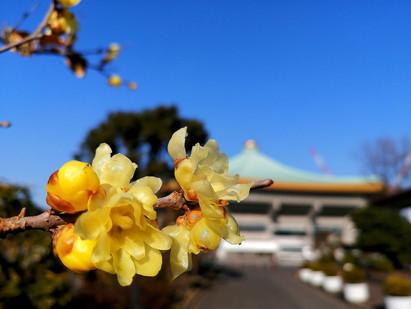 "18Jan. 本日の東京 Today's tokyo(Finding ""Japanese allspice"")"