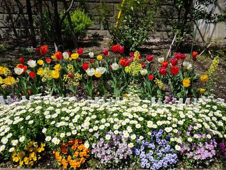 Best season to see beautiful flowers