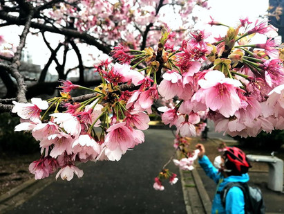 12Mar.  本日の東京 Today's tokyo