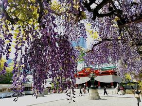 19Apr.  本日の東京 Today's tokyo