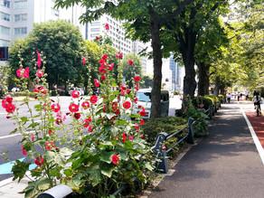 09Jun.  東京の四季 Today's tokyo