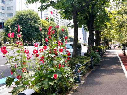 12Jun.  東京の四季 Today's tokyo