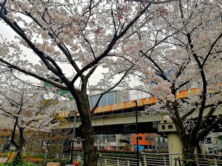 25Mar.  本日の東京 Today's tokyo