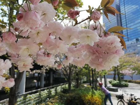 03Apr.  本日の東京 Today's tokyo
