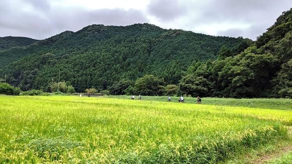 里の田園をサイクリング