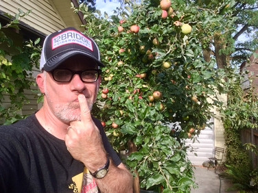 オ州酒林檎のハードサイダーを作りましょう!