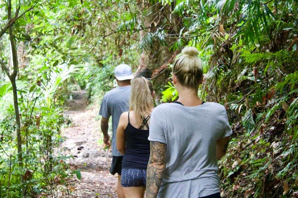 Walking the Purling Brook Falls circuit