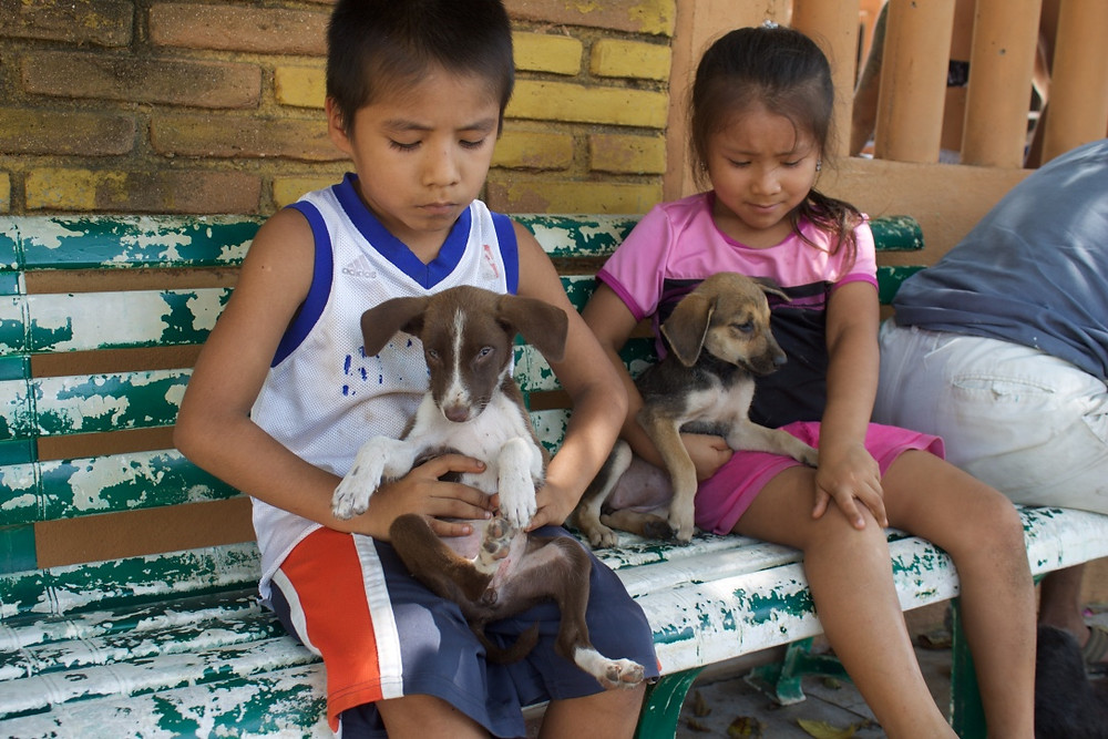 Esteriliza y Educa - Veterinary Clinic - Puerto Escondido