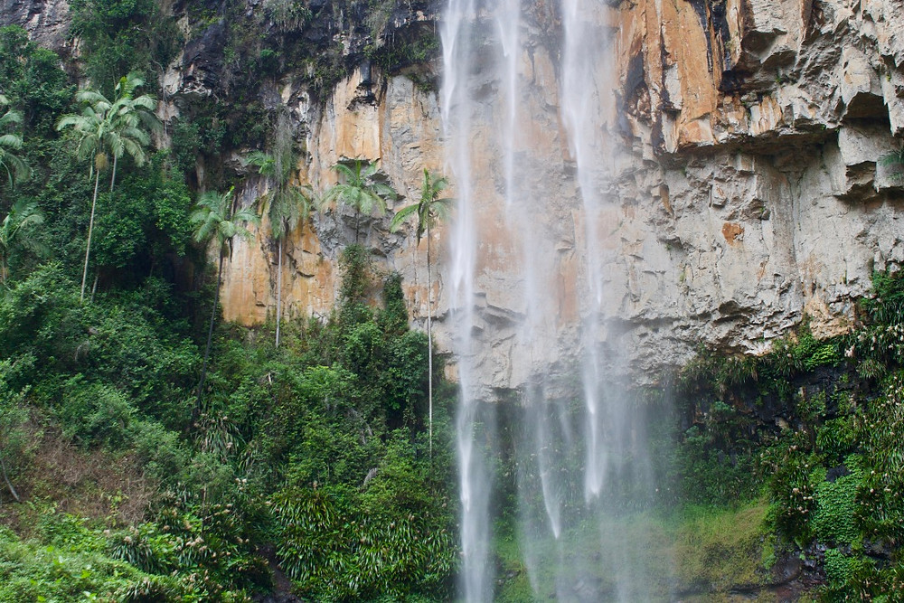 Tropical jungle vibes
