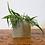 Thumbnail: Olive Oil Nettle Soap