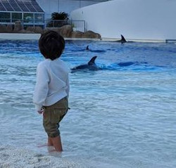 Aquarium where dolphin live