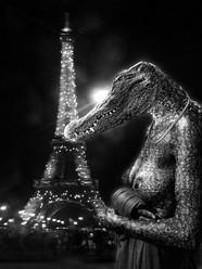 Recherche Crocodile