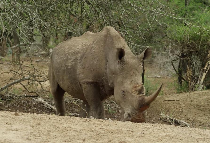 Rhino pic.jpg