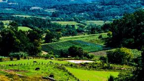 Projeto de lei quer trazer novas regras para a compra de terras rurais por estrangeiros