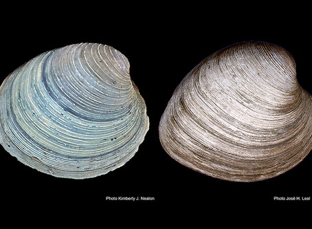 Nature's Iron-based Shell Dye