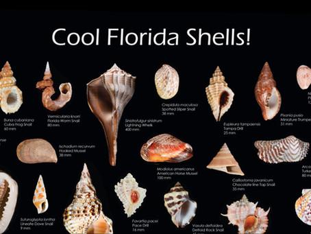 New Poster: Cool Florida Shells!
