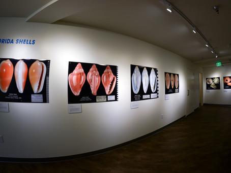 In Focus Exhibition Opens Tomorrow!