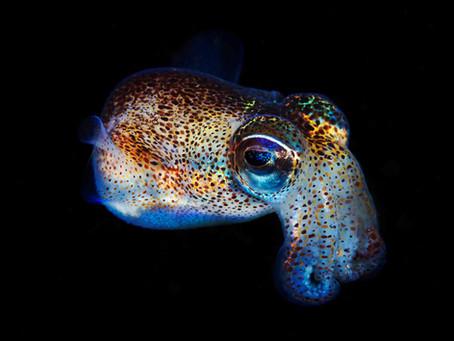 Squids in Space