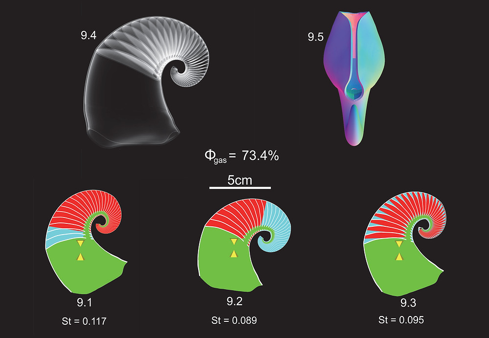 The Properties of Fossil Cephalopod Shells