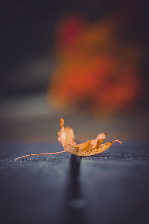 An autumn leaf on a park table