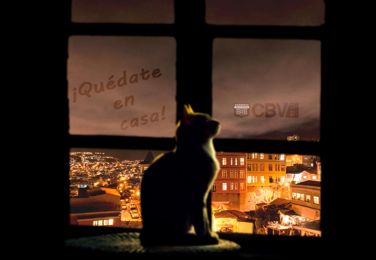 quedate-en-casa-gatito.png