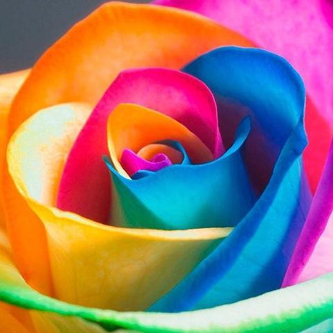rainbow rose.jpg
