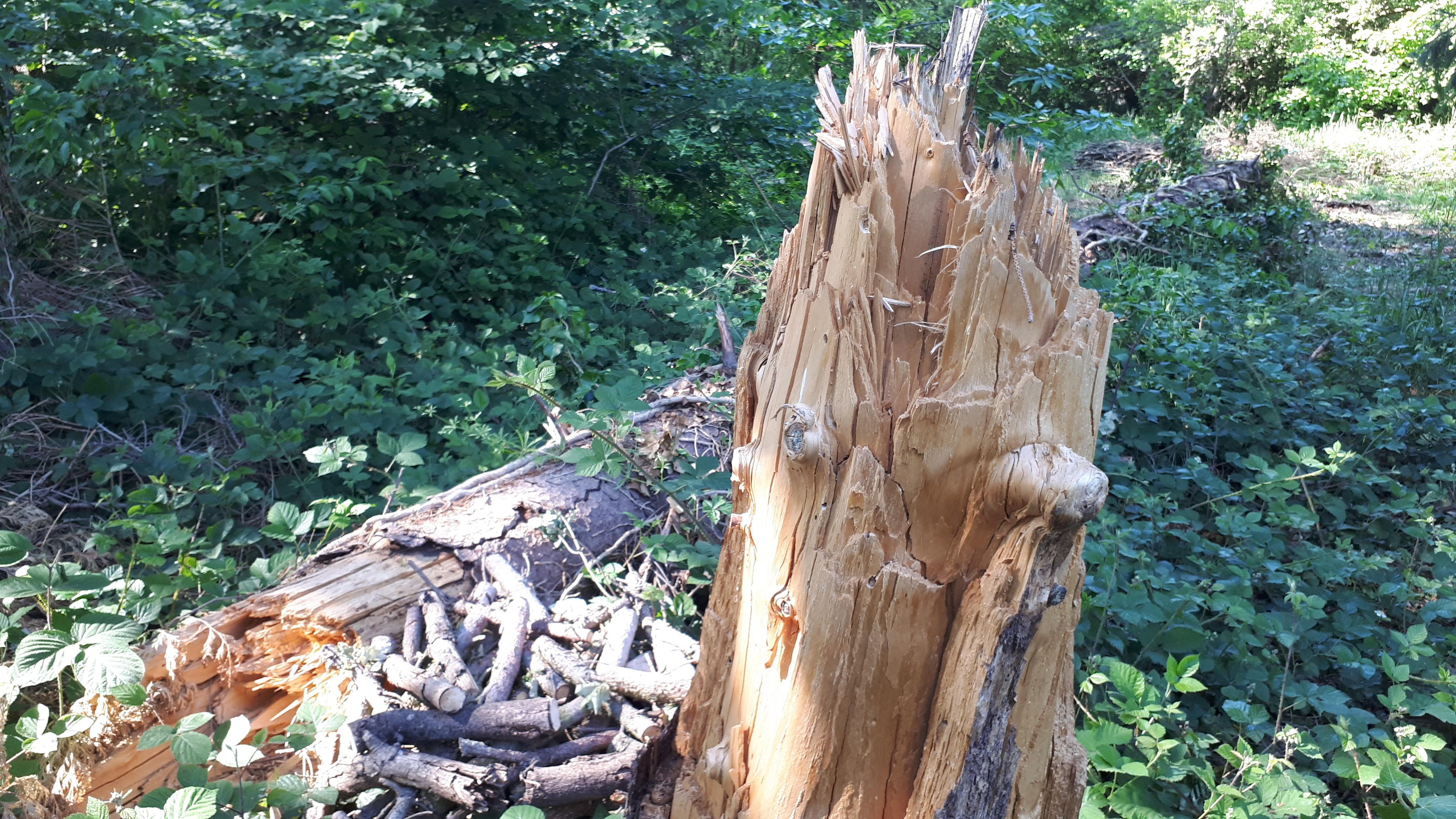 Wat een kracht die wind,... leek nog een stevige boom