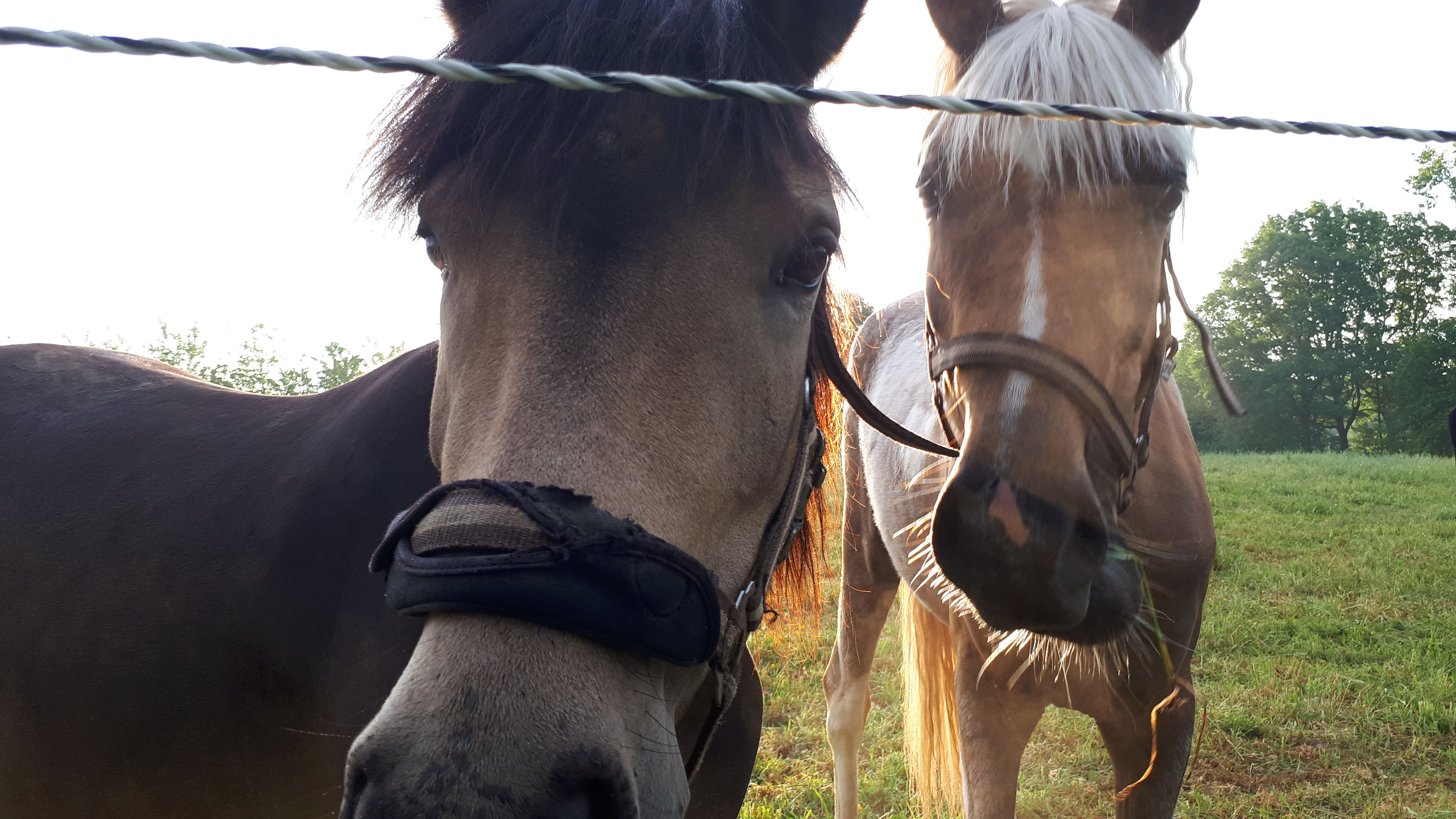 Met wat geluk komen de paardjes eens snuffelen