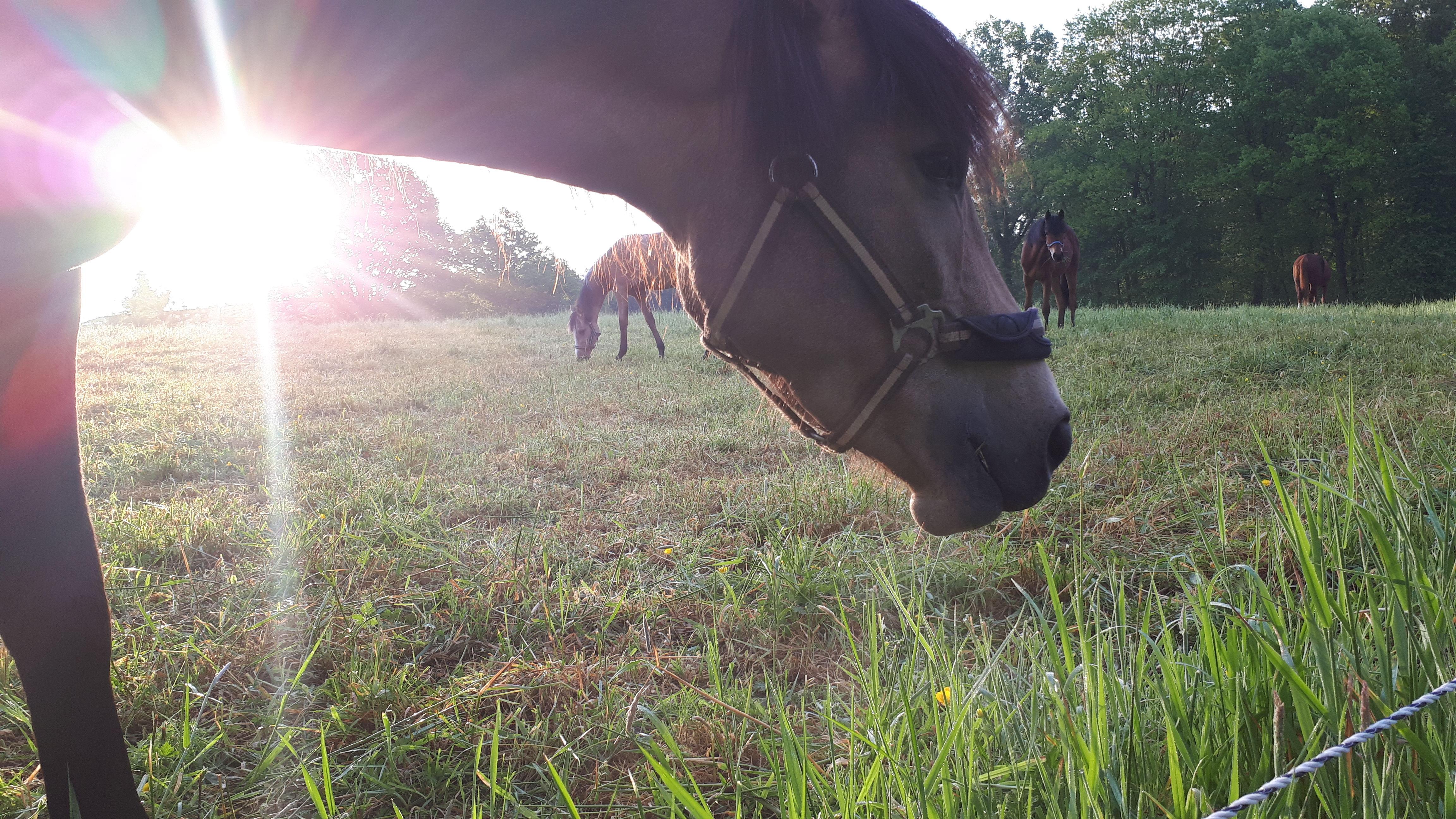 Achteraan links de aangrenzende weide van de buurvrouw met (soms) paardjes