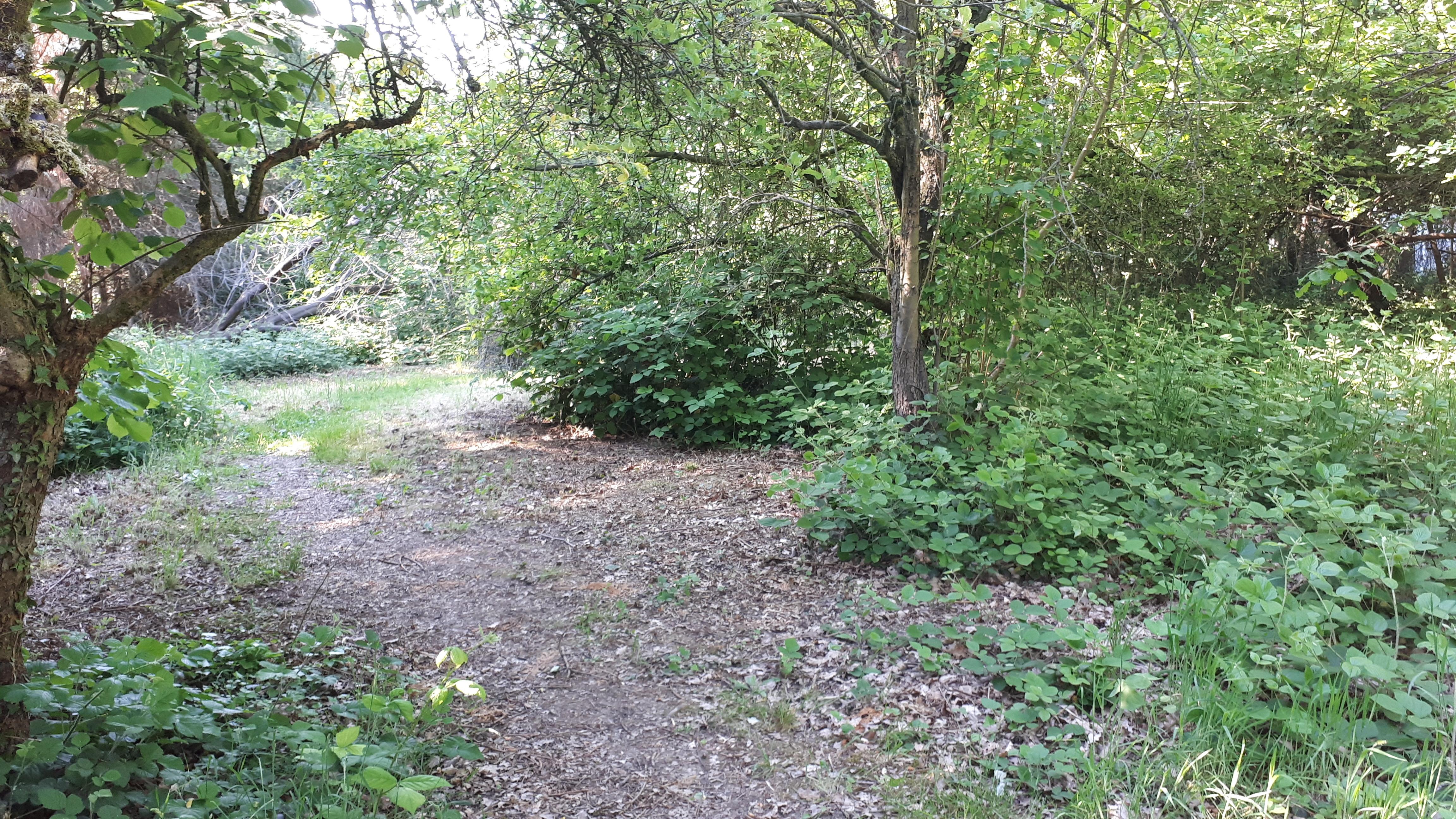 De oude boomgaard met veel wildgroei en mooie natuurlijke plekjes